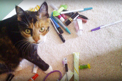 Is Your Cat A Secret Hoarder? See Common Things Cats Collect!