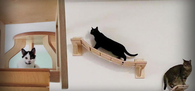 """See the Most Amazing """"Cat Playground"""""""