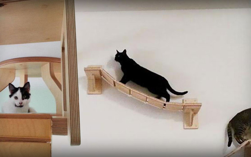 "See the Most Amazing ""Cat Playground"""