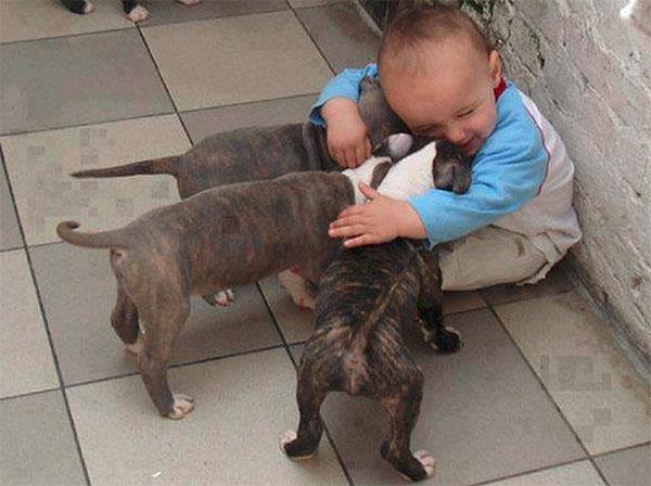 dog_kids2_0005_dog6