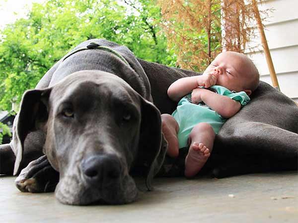 dog_kids2_0008_dog9