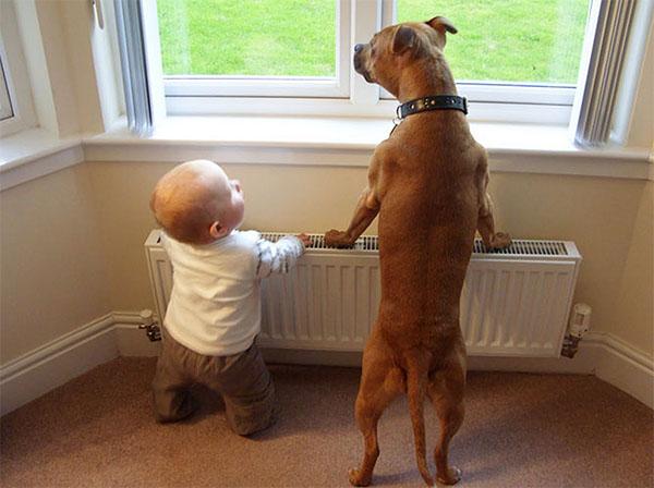 dog_kids2_0010_dog11