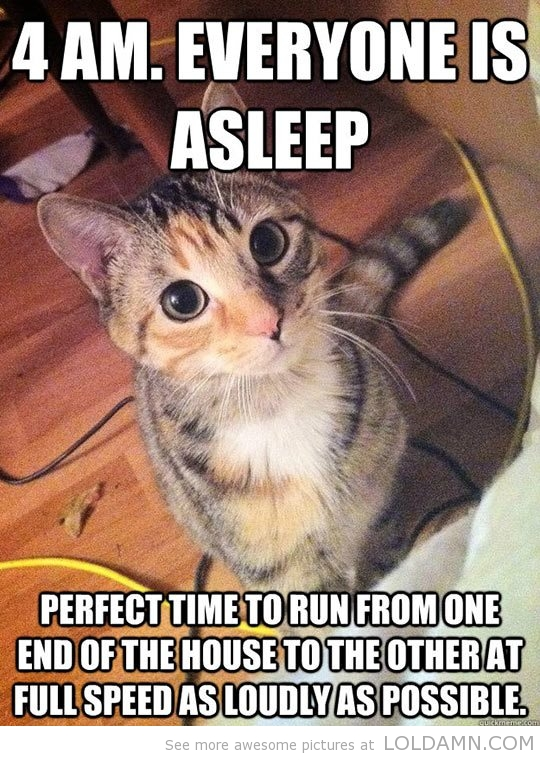 funny_cat_picture10