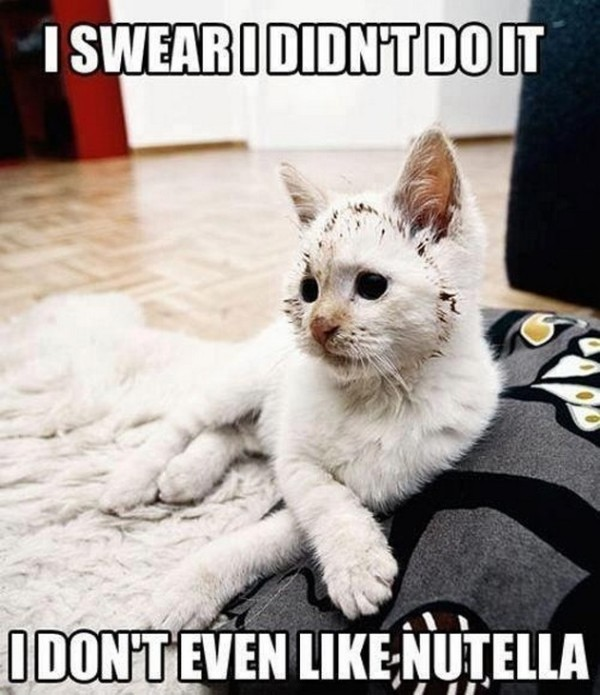 funny_cat_picture11