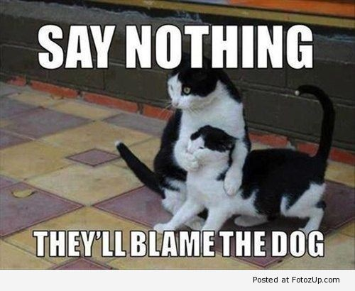 funny_cat_picture12