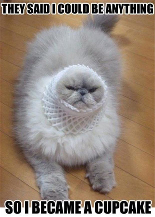funny_cat_picture7