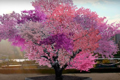This Crazy Tree Grows 40 Kinds of Fruit