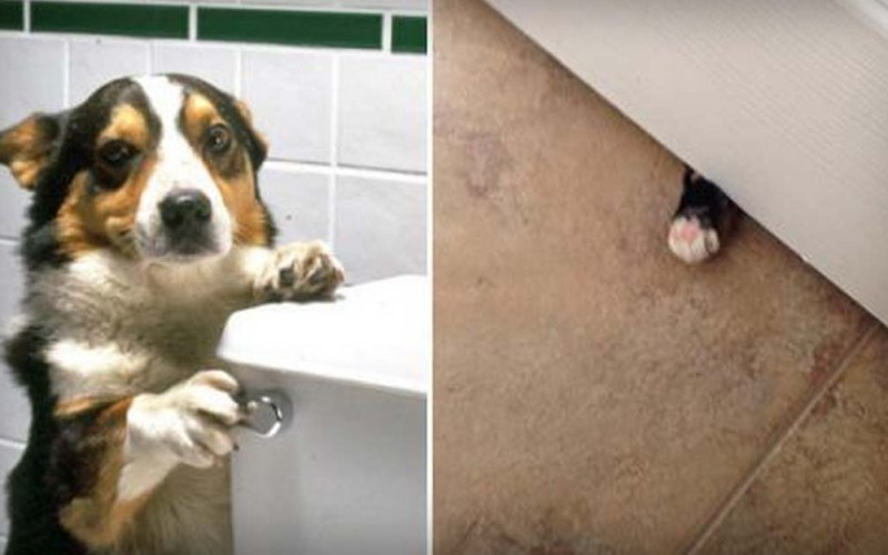"Animals Have No Idea What ""Privacy"" Means"