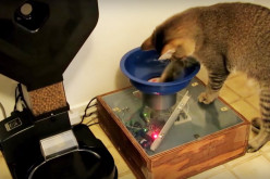 Guy Builds Cat Feeding Machine That Requires The Kitty To Hunt For The Food