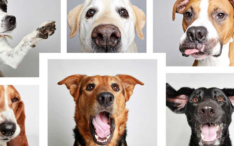 Woman Creates Hilarious Photo Booth Pictures To Help Get Dogs Adopted