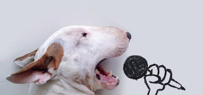 Artist Creates Fun Illustrations With His Dog— Jimmy Choo