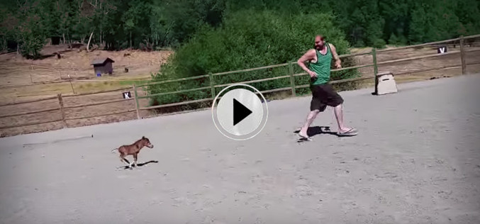 A Baby Miniature Horse Follows His Owner Everywhere