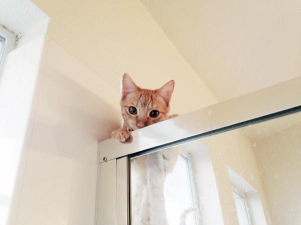 no privacy_animals9