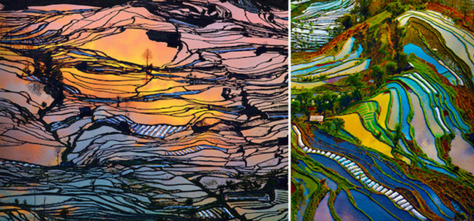 Rice Fields That Look Like Abstract Paintings