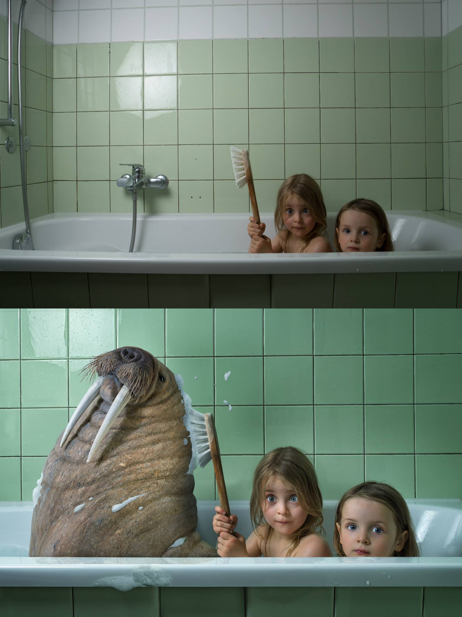 walrus before and after